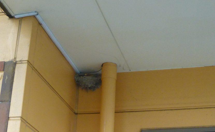 ツバメの巣1
